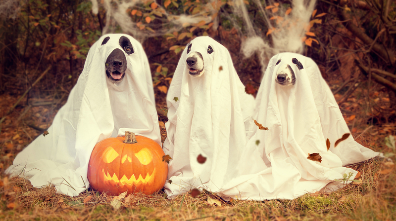 Pumpkin and dogs look cute together but you want to feed your dog fresh pumpkin!